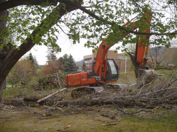 Oops, there goes another heritage tree.