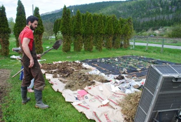 Dan Spark dumps another load of chicken manure onto the lasagna garden.