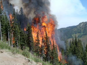 (Wildfire Management Branch file photo)