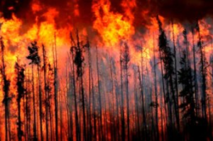 (Wildfire Branch)