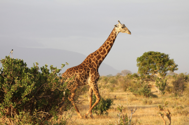 Wildlife is easy to find in Africa. (Image credit: comfight.com)