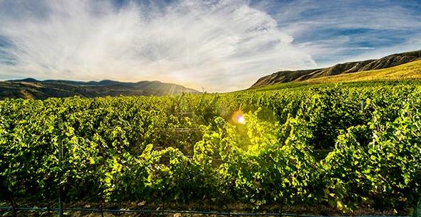 Kamloops now has four wineries. (kamloopswinetrail.com photo)