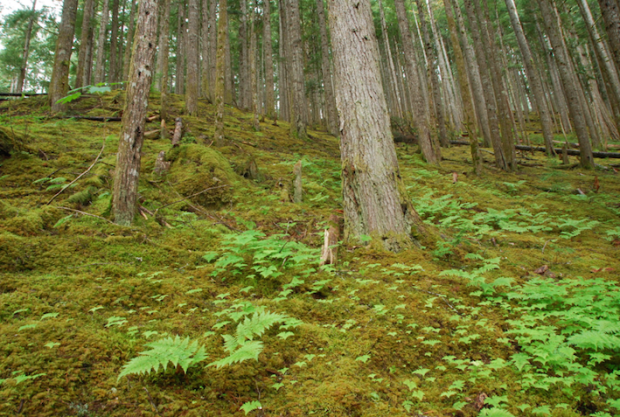 It's not too late to save the forest. (Daniela Ginta photo)