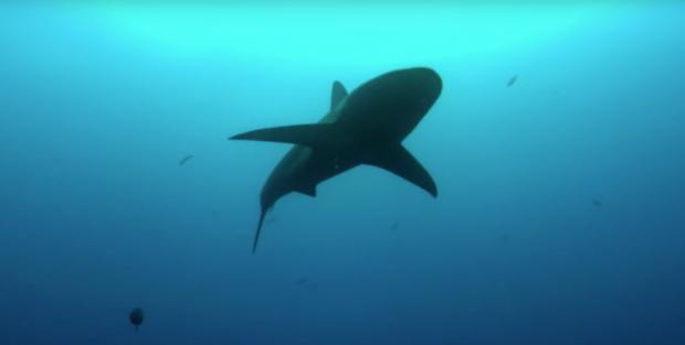 (Sharkwater.com)