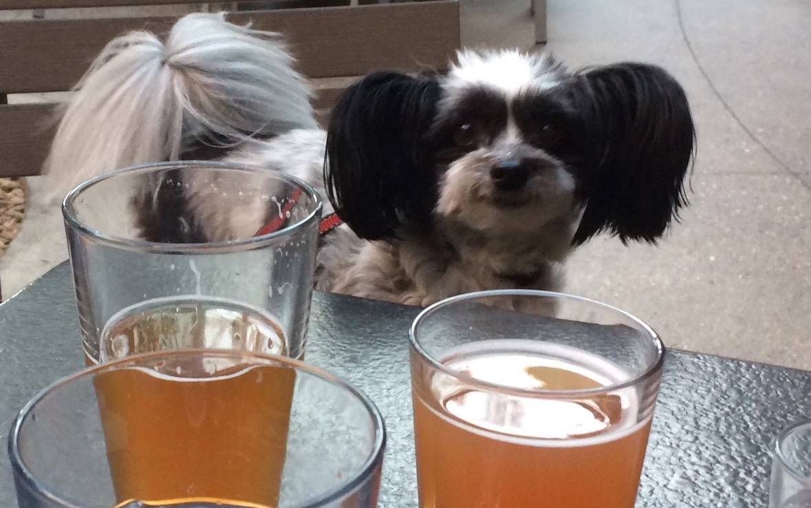 Editorial Why Not Allow Dogs Where We Eat And Drink