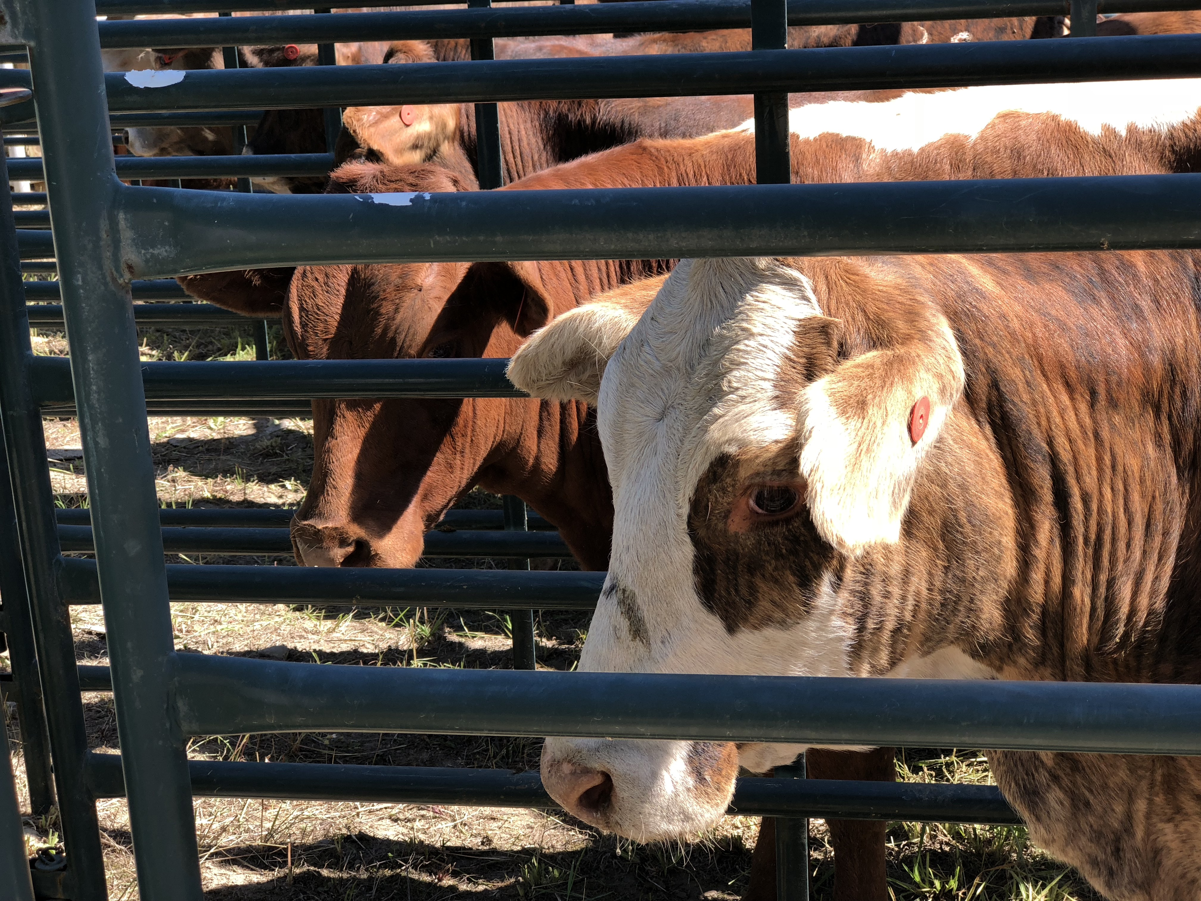 Bepple Here In Cattle Country Our Ranches Are Becoming